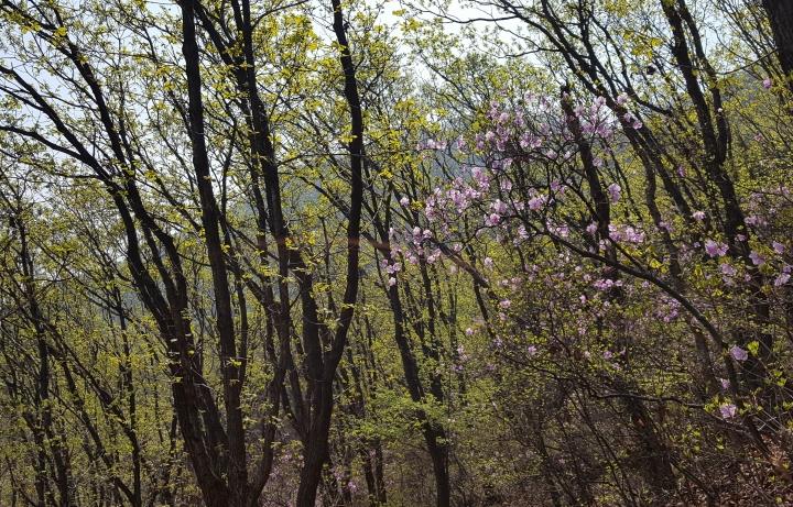 검단산의 봄 by 마을지기